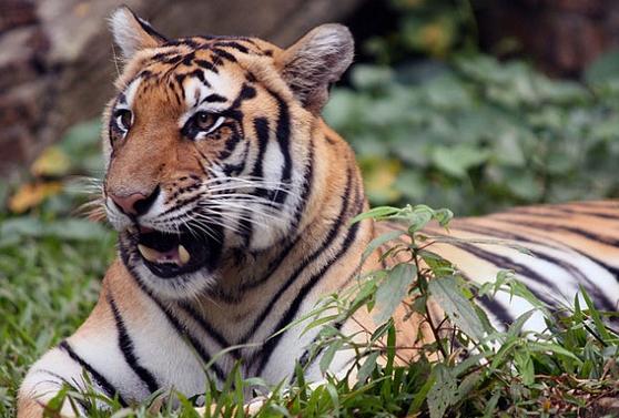 Tempat Wisata di Bogor dan Sekitarnya Taman Safari Cisarua