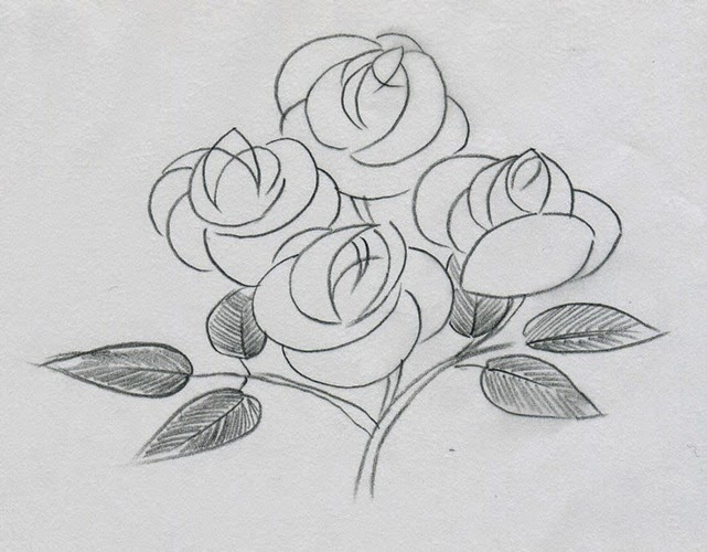 Flowers Rose Drawing Many