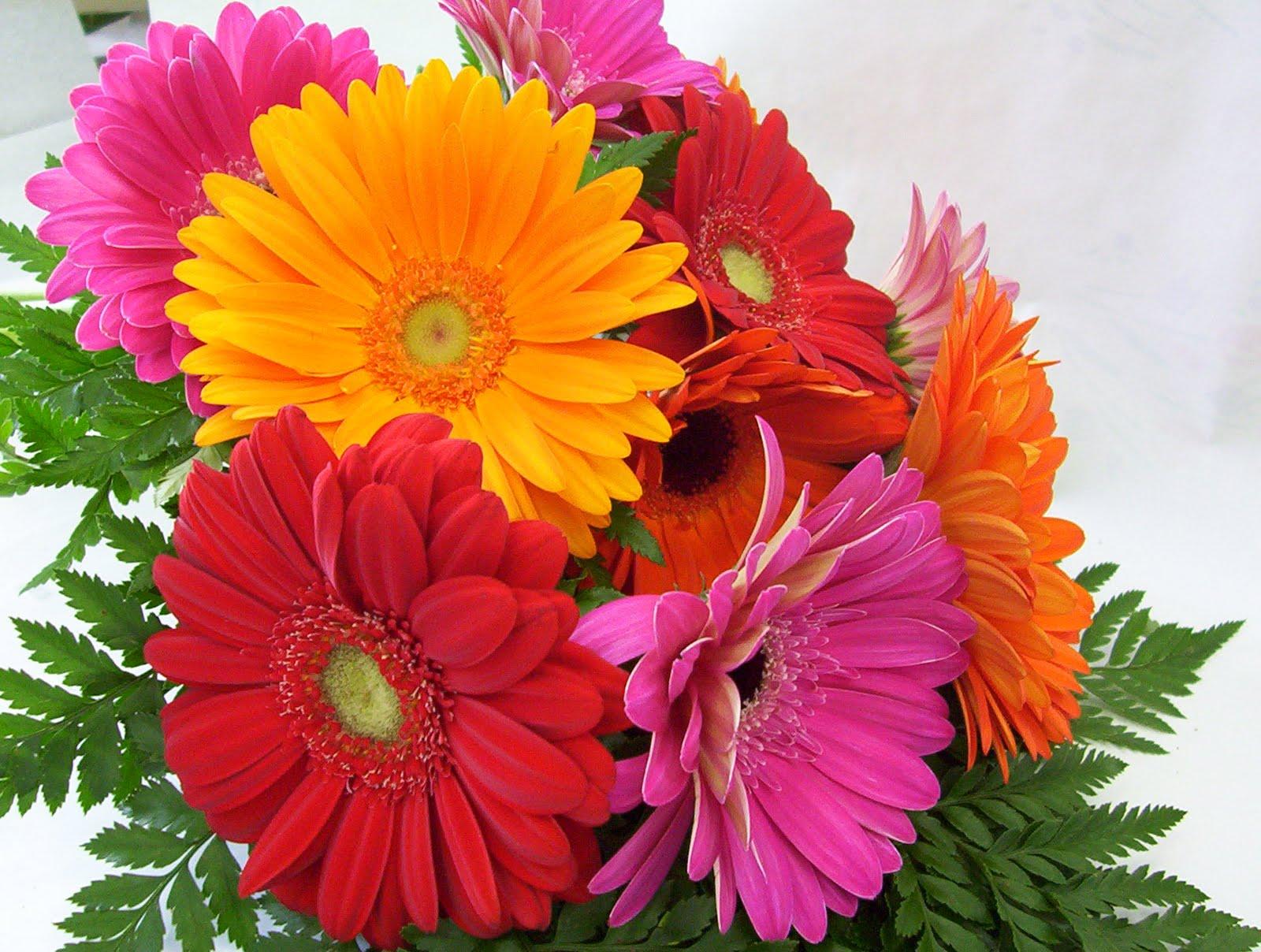 Descargar Imagenes De Flores Gerberas - ramo de flores aislados, gerberas Fotos de archivo e