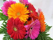 Imágenes de flores y plantas gerberas flores