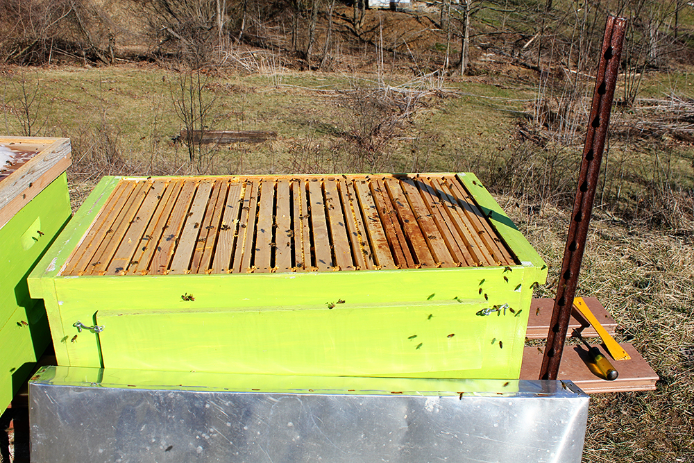 Rurification deadout if you blow up the pic you might be able to see the hundreds of bees on this hive trying to harvest it fandeluxe Ebook collections