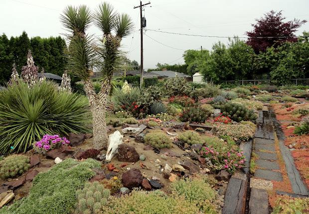 danger garden hillside desert