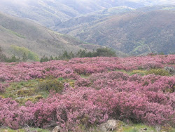 Serra de Montesinho/Bragança