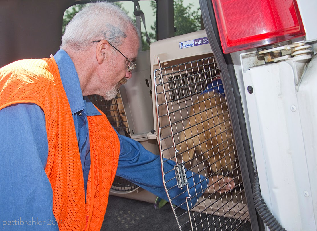 A man wearing a blue shirt and an orange vest and glasses is leaning in toward a dog airline crate that is in the back of a white van. The crate door is open and there is a golden retriever sniffing the man's left hand.