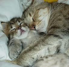 kucing yang lagi tidur
