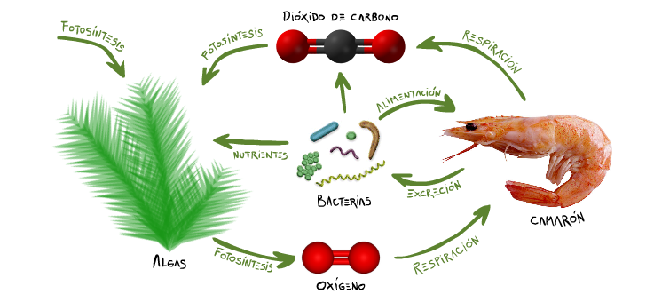 Ecosistema de la ecoesfera
