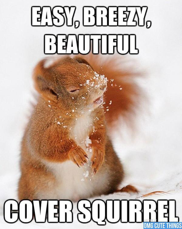 Funny Memes For Animals : Funny animal memes part