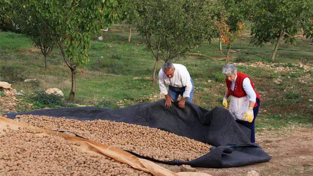 Ημερίδα με θέμα την καλλιέργεια καρυδιάς, αμυγδαλιάς και φουντουκιάς