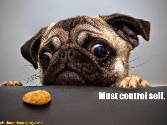 http://www.chubaandcompany.com/2011/09/self-control-pug-pic.html