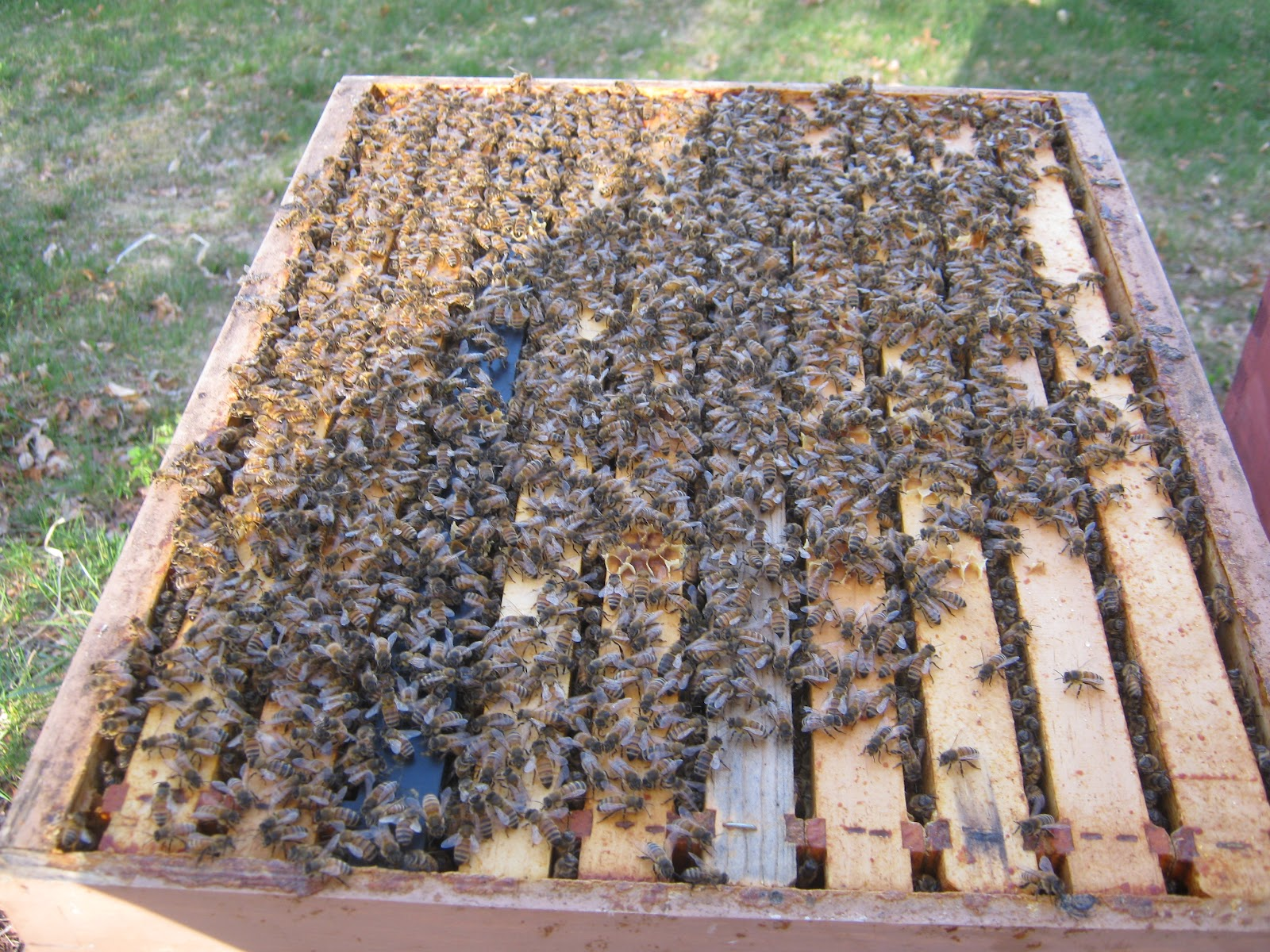 steven u0027s bees may 2012