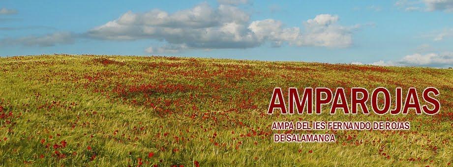 AMPA FERNANDO DE ROJAS
