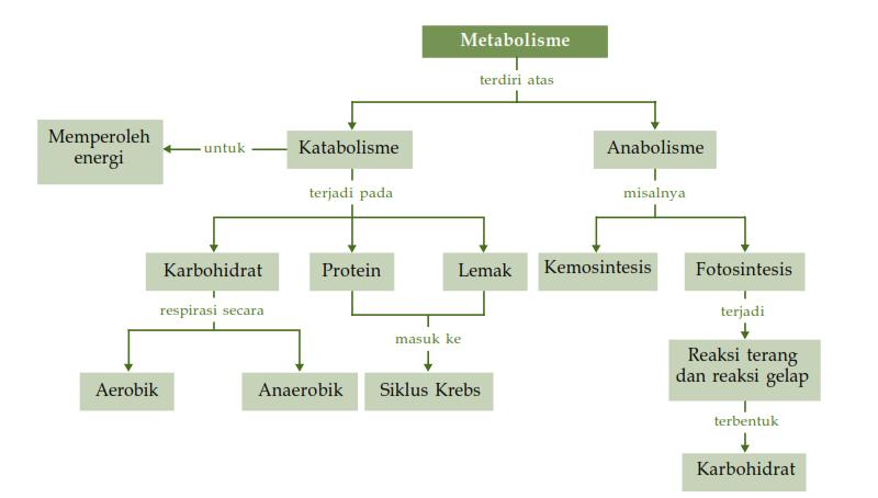 Pengertian Metabolisme Lipid Serta Proses Maupun Fungsinya