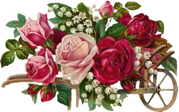 BUON COMPLEANNO TEODORA15 - Pagina 2 Rosa+rosserose