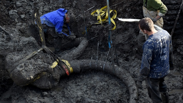 Michigan farmer finds 15K-year-old woolly mammoth skull stashed by Ancient Natives. Image