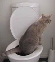Sedot WC Gudo-Jombang