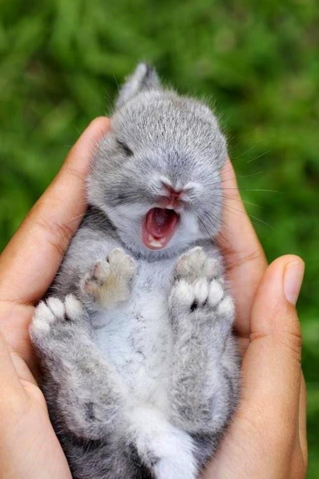 Cute baby animals tumblr