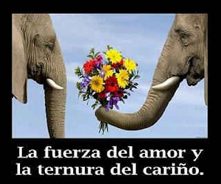 Imagenes Romanticas y Frases de Amor para Facebook, parte 1