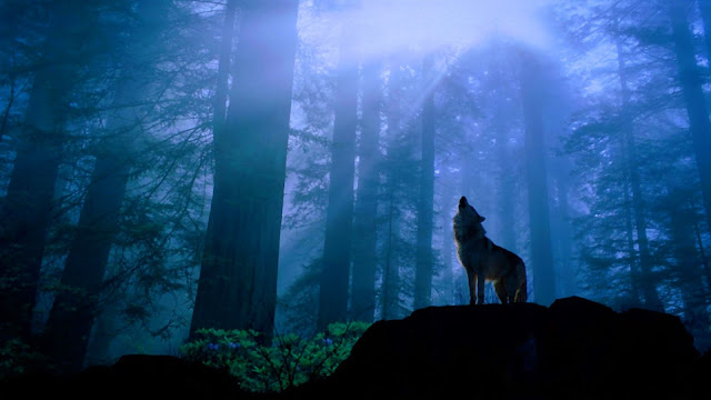 Howling wolf in forest HD Wallpaper
