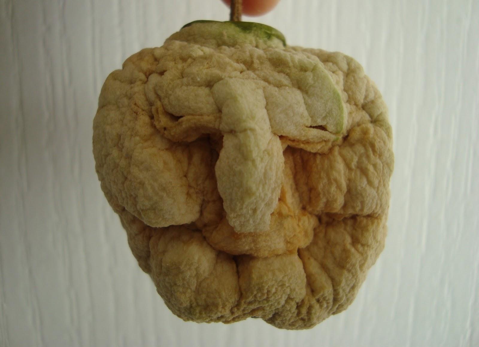 Shrunken Apple Head Doll Apple Dolls as Shrunken Heads