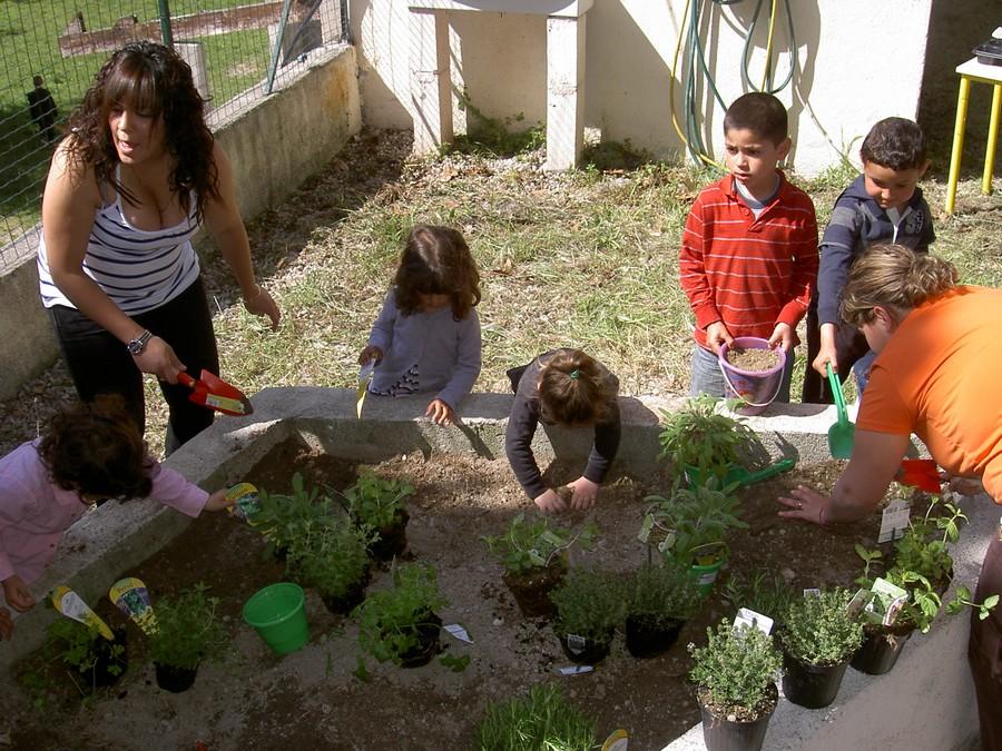 Omjcl drap mater avril 2012 for Entretien persil jardin