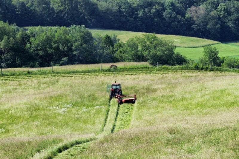 first cut on the large hayfield