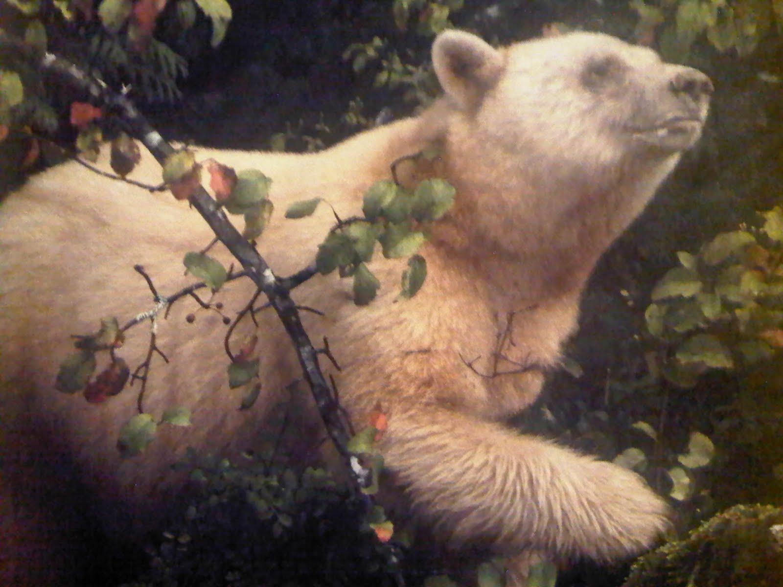 touching spirit bear summary