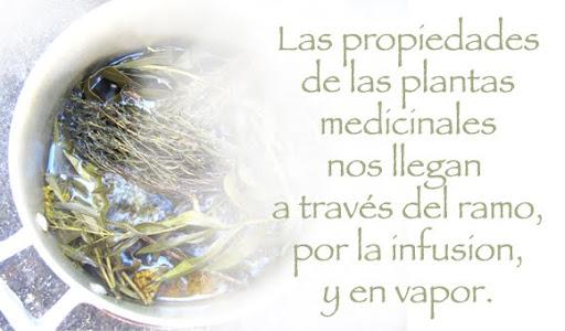 Plantas Medicinales del Temazcal