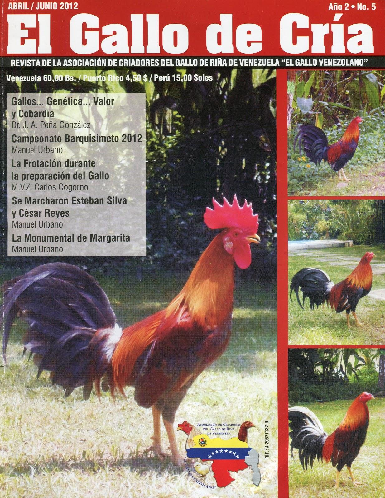 Exclusivo gallo negro XXX Porno Canal / gallo negro