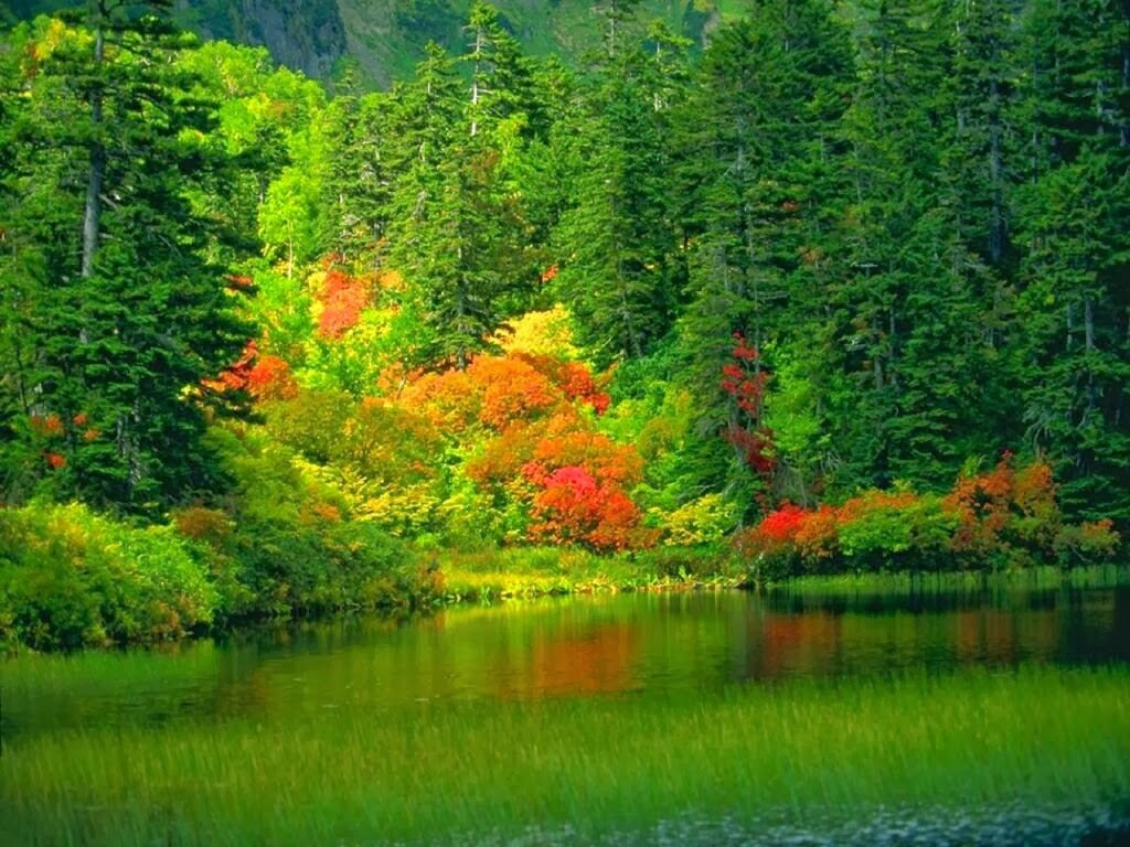 beautiful pond nature scenery hd wallpapers