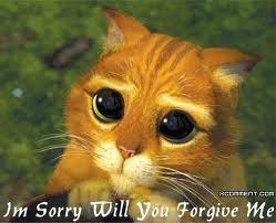 Au féminin - Page 5 I-sorry-cat-random-22196648-249-202