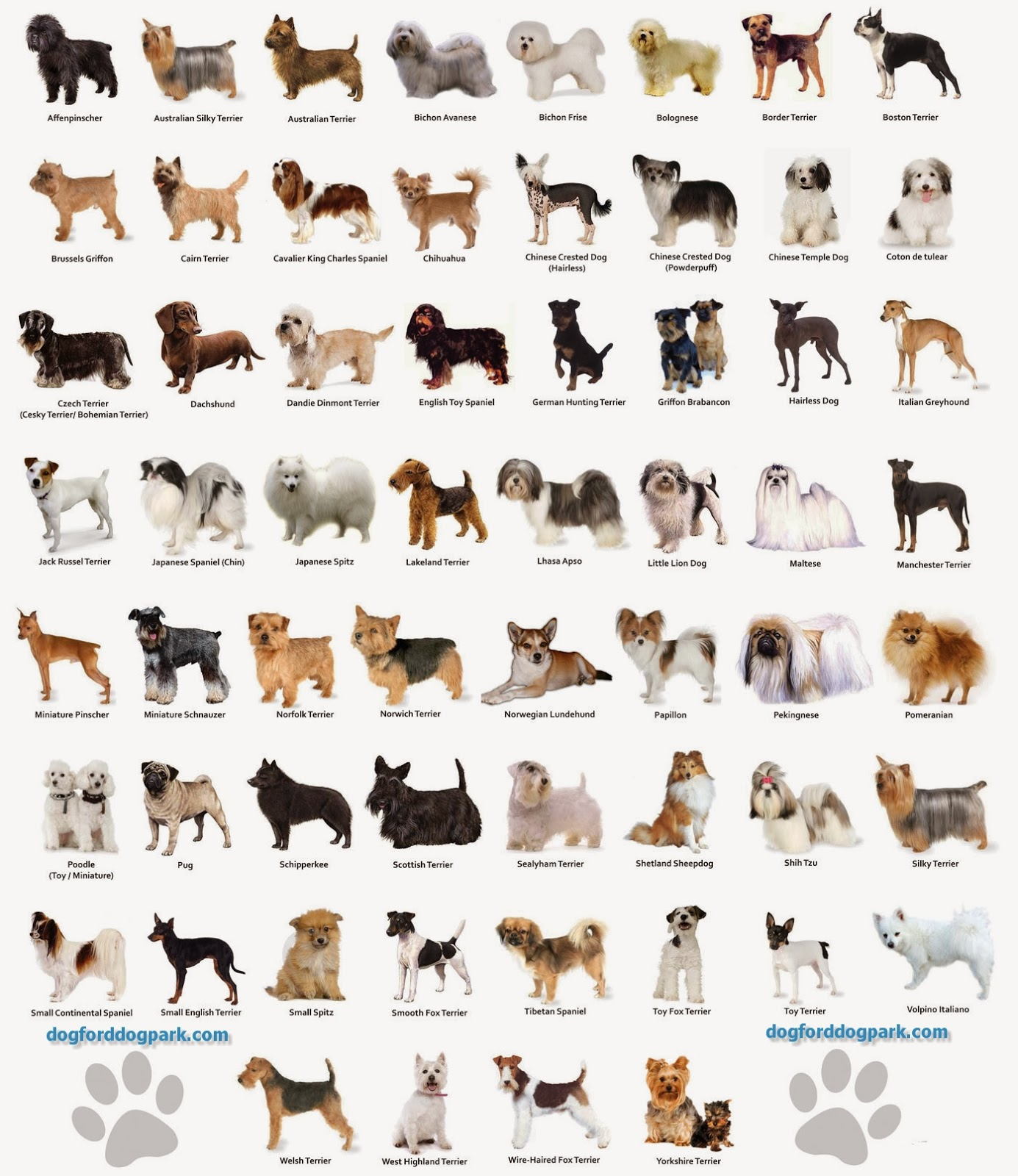 Discussion on this topic: How to Choose the Right Breed of , how-to-choose-the-right-breed-of/