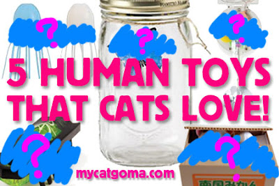5 Human Toys That Cats Love