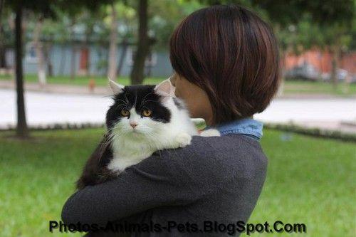 http://4.bp.blogspot.com/-RbSVBDUQUDM/TphiW9n-3BI/AAAAAAAACAk/OHClF8wBRco/s1600/Cute%2Bcat_0607.jpg
