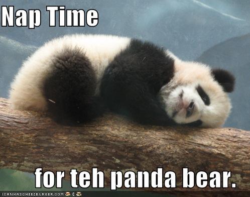 Cute pandas with captions cute pandas with captions photo3 voltagebd Choice Image