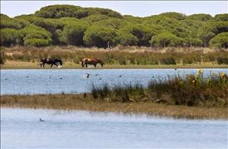 Laguna de Santa Olalla en Doñana