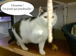 Jolie chatte noire et blanche joue avec un ruban qui pendouille.