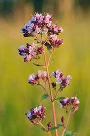 Flor de la planta