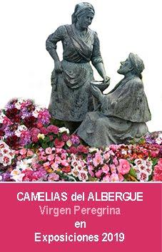 Camelias del Albergue 2019