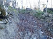 Assalto al bosco