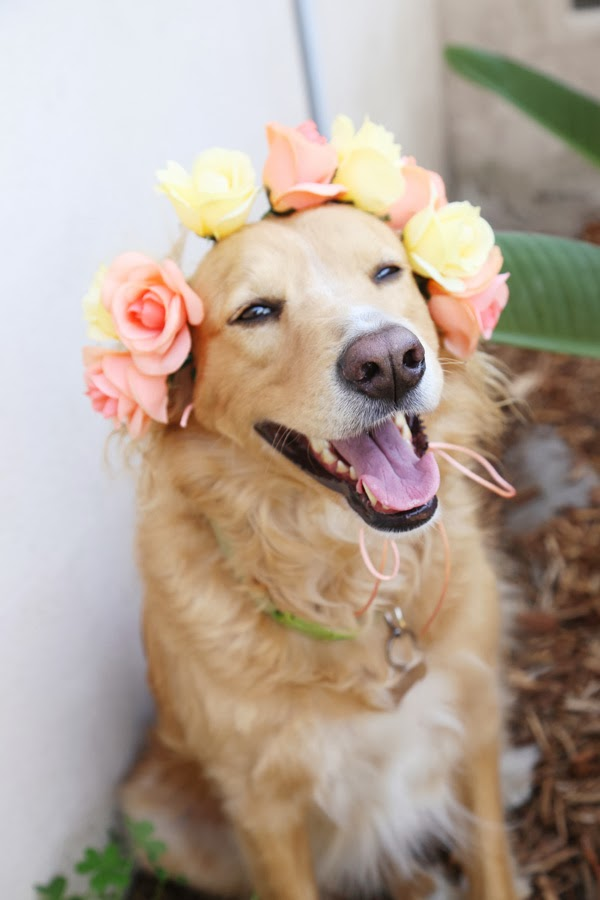 Diy+dog+flower+crowns+1