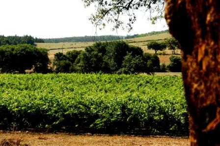 Casa com Vinho: Julho 2012