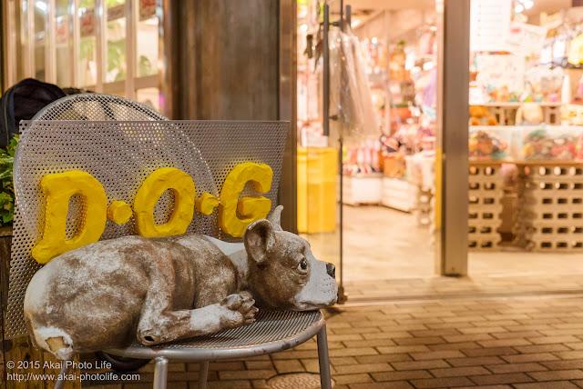 下北沢 D・O・G(ディーオージー)の看板・犬