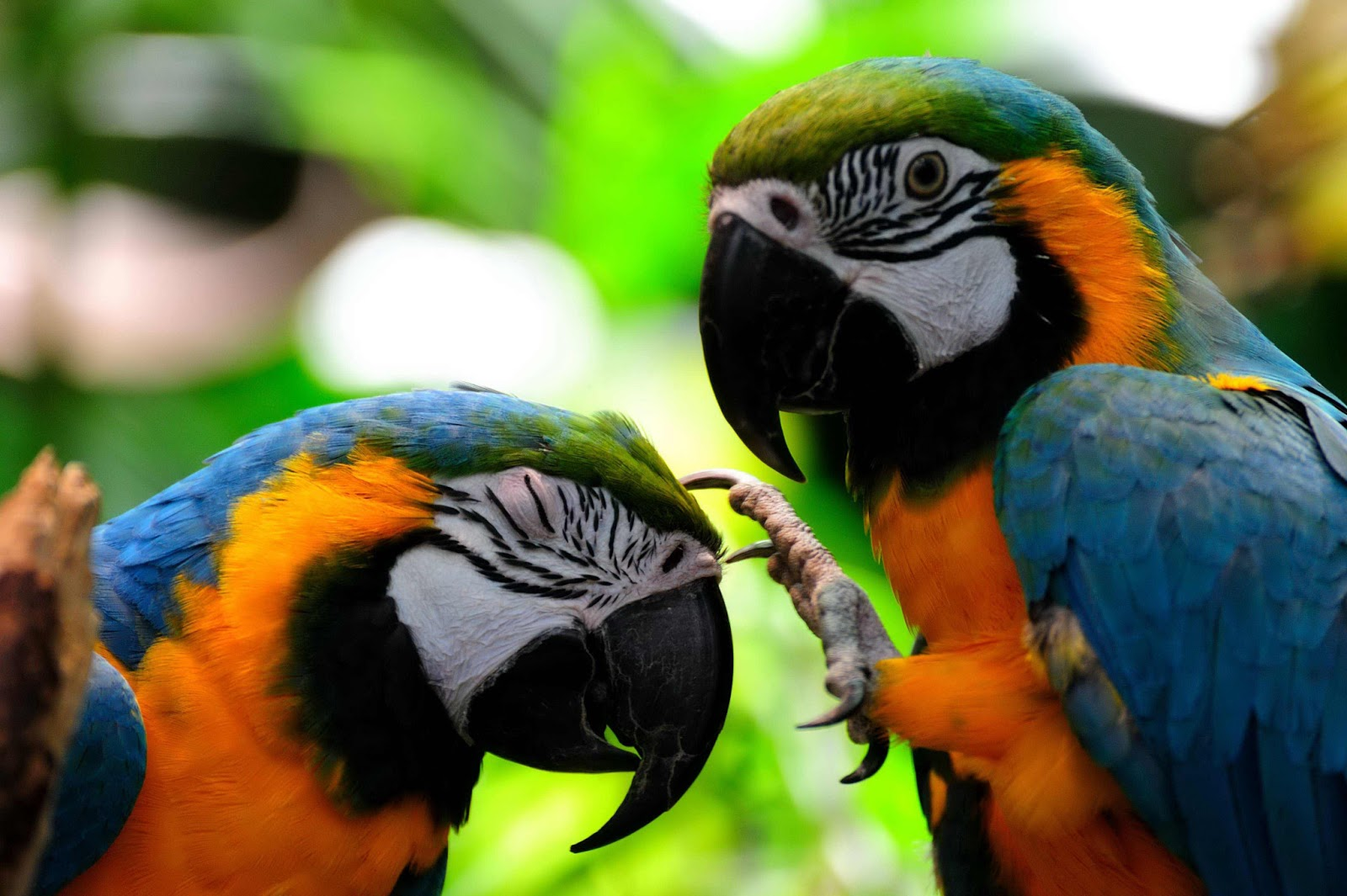 amazon rainforest birds pictures