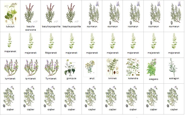 Planowanie rabaty ziołowej