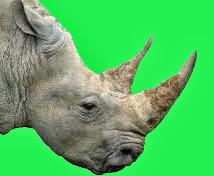 rhino horn