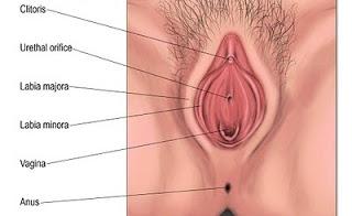 Bentuk vagina Jaufa