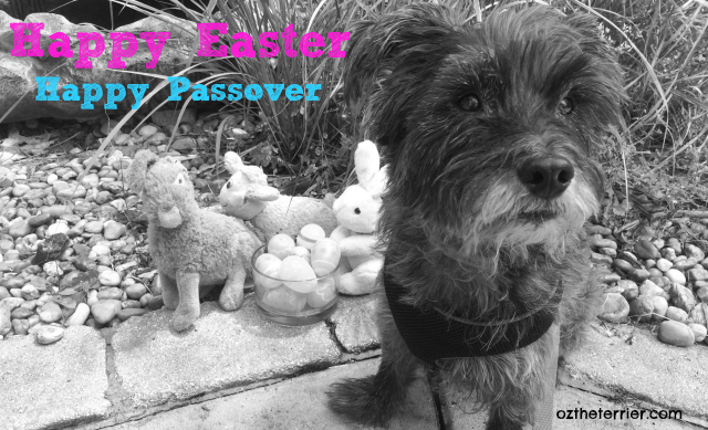 Celebrate the Easter & Passover holidays