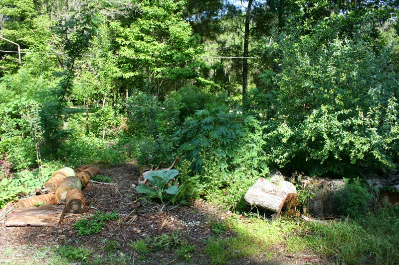 Food Forest Backyard :  Food Forest is NOW ON SALE (Plus pictures of my food forest right now