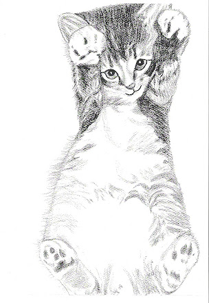 Kitten playing pic