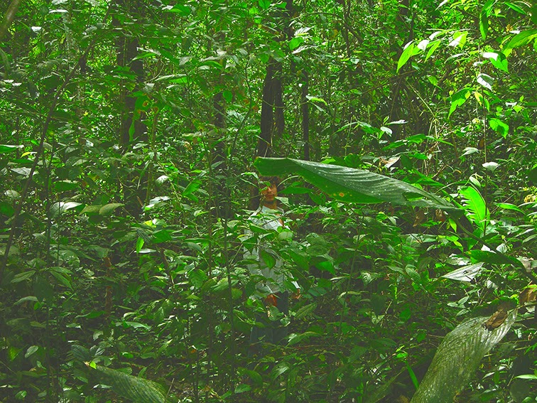 Resi visto a través de la selva